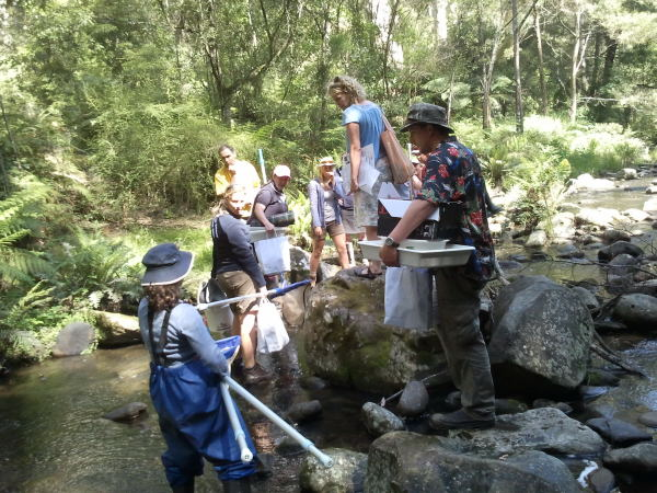 waterbug fieldwork training